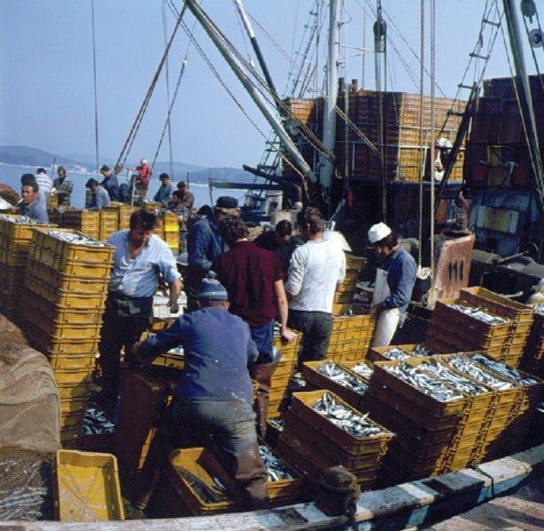 uloviti ribu iz Australije